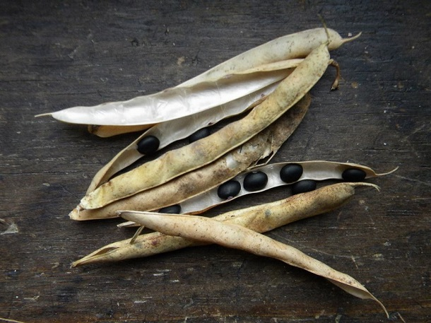 Seed Saving Skillshare at Wyld'Kin