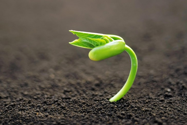 Echange de semences