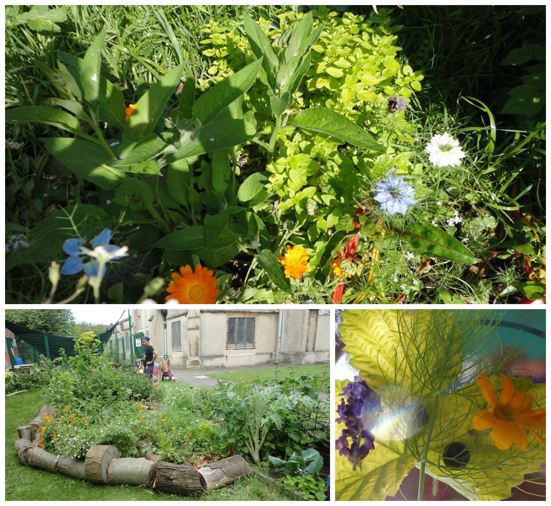 Open edible gardens, gardening drop in