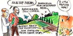 Monsanto Supersizes Farmers' Weed Problem–but Science Can Solve It