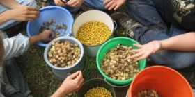 Hudson Valley Seed Freedom Initiative