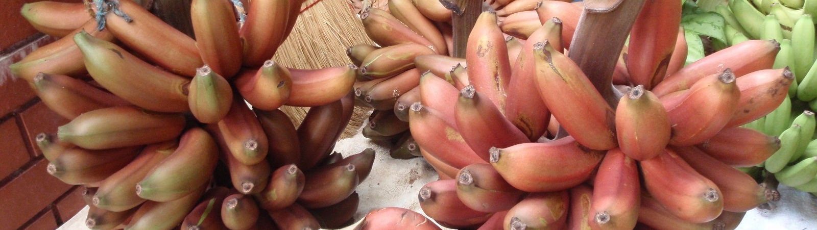 WHY IS BILL GATES BACKING GMO RED BANANA 'BIOPIRACY'?