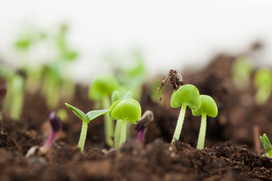 Sprouting-Seeds jpg