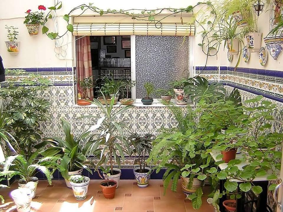 Intercambio de plantas y semillas mas  fiesta