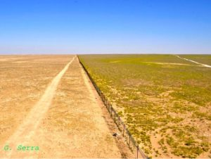 Over-grazing and desertification in the Syrian steppe are the root causes of war