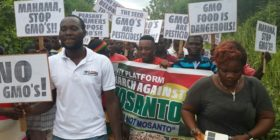 The Seed belongs to us not to Monsanto — Ghana