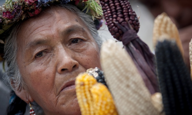 A woman participates in a protest against transgenic corn last year in Mexico City, Mexico. Monsanto announced that its first-quarter earnings dropped on lower sales to South American farmers. Photograph: Xinhua/Landov/Barcroft Media