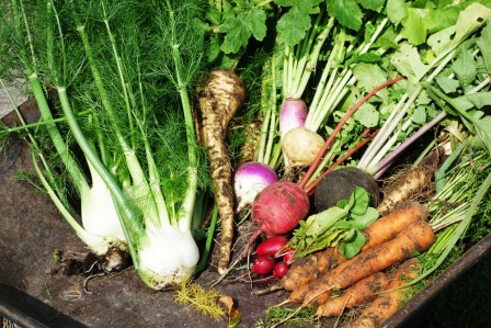 Lecture: How to start a vegetable garden