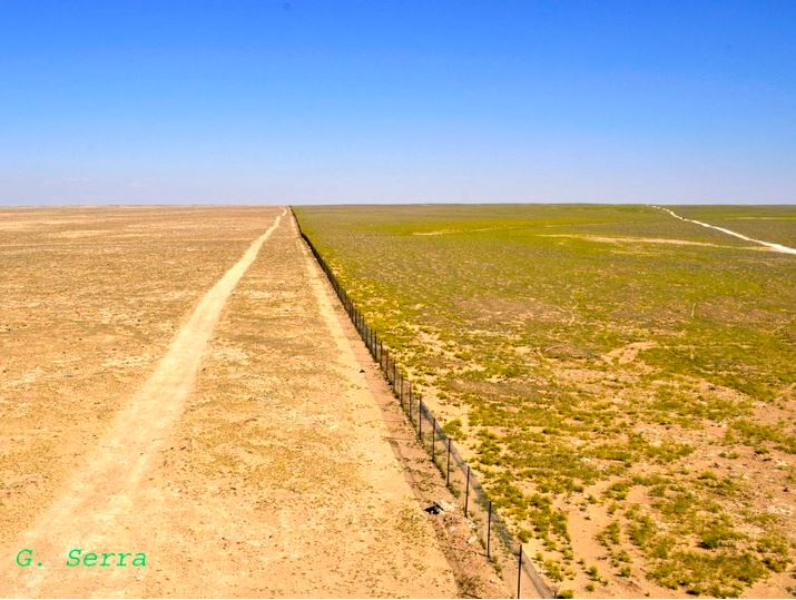 The edge of an experimental sheep grazing exclusion zone (to the right) within Al Talila Reserve, Palmyra, photographed in March 2008 in the midst of an intense drought period. Sheep quasi uncontrolled grazing was allowed to the left of the fence. Grazing of reintroduced native antelopes at low densities had been allowed within the exclusion zone for a period of 10 years. Photo: Gianluca Serra.