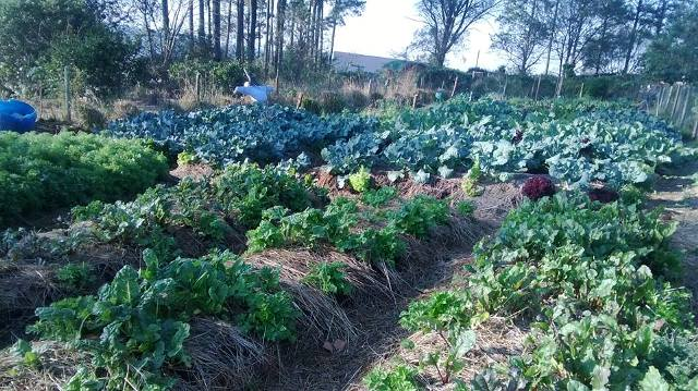 Food Garden Visit & Seed Exchange – Roseway Waldorf School, Hillcrest, South Africa