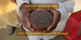 Sarson Satyagraha – Civil Disobedience against GM Mustard