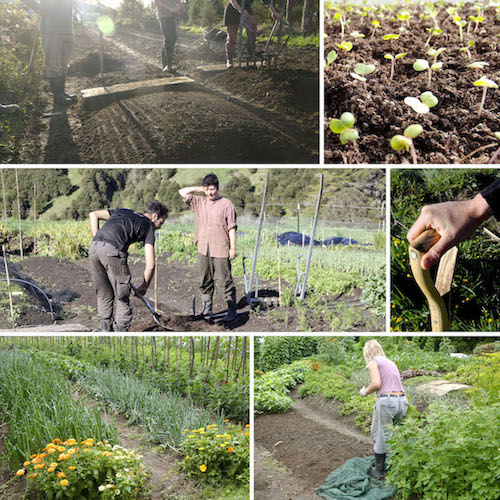 Spring Internship Growing Soil, Food & Health