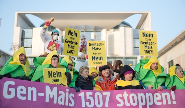 epa04055917 People protests against the authorization of gentically modified (GM) maize with signs and banners reading†'Stop GMO Maize 1507 ', 'Only a NO can protect us' and 'No to GMO Maize 1507' in front of the Federal Chancellor's Office in Berlin, Germany, 05 February 2014. The protesters demand the federal government to vote against the authorization in Brussels. Otherwise the GM maize, produced by US company DuPont-Pioneer could be cultivated in the whole European Union.  EPA/JOERG CARSTENSEN