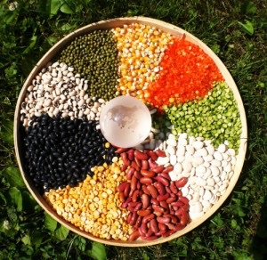 SEED SOVEREIGNTY ~ Saving Seeds & Building Community