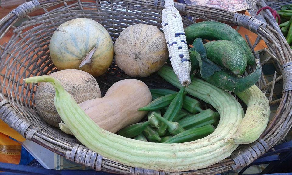 Semilune e Amici dell'orto 2 (Semi Ortaggi Antichi e tradizionali) per Seed Freedom