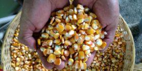 On World Food Day, Celebrating the Power of Regenerative Organic Farming