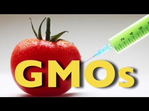 The Whole Truth About GMOs