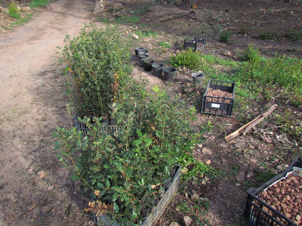 Giornata di piantumazione / Tree planting day