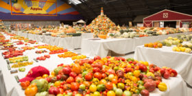 National Heirloom Festival: Hope to End Seed Slavery