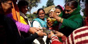Basant Panchami: Welcoming Spring, Celebrating Organic Mustard Diversity