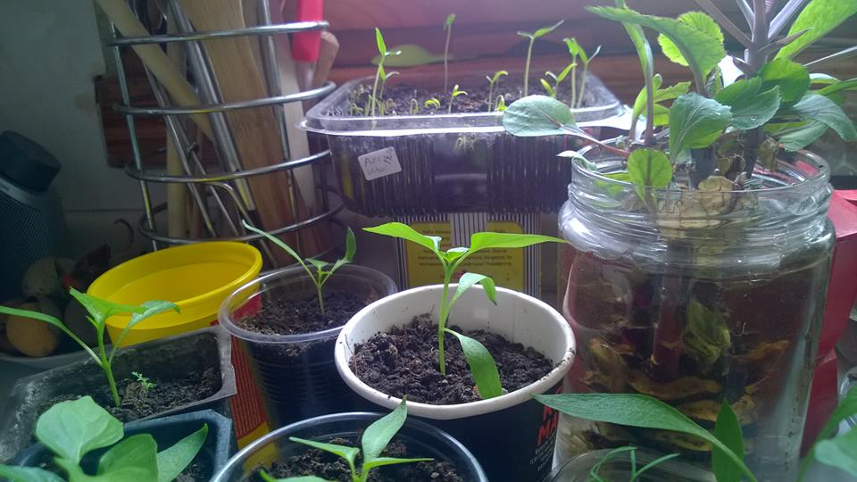 Seeds and Seedlings  Exchange Day