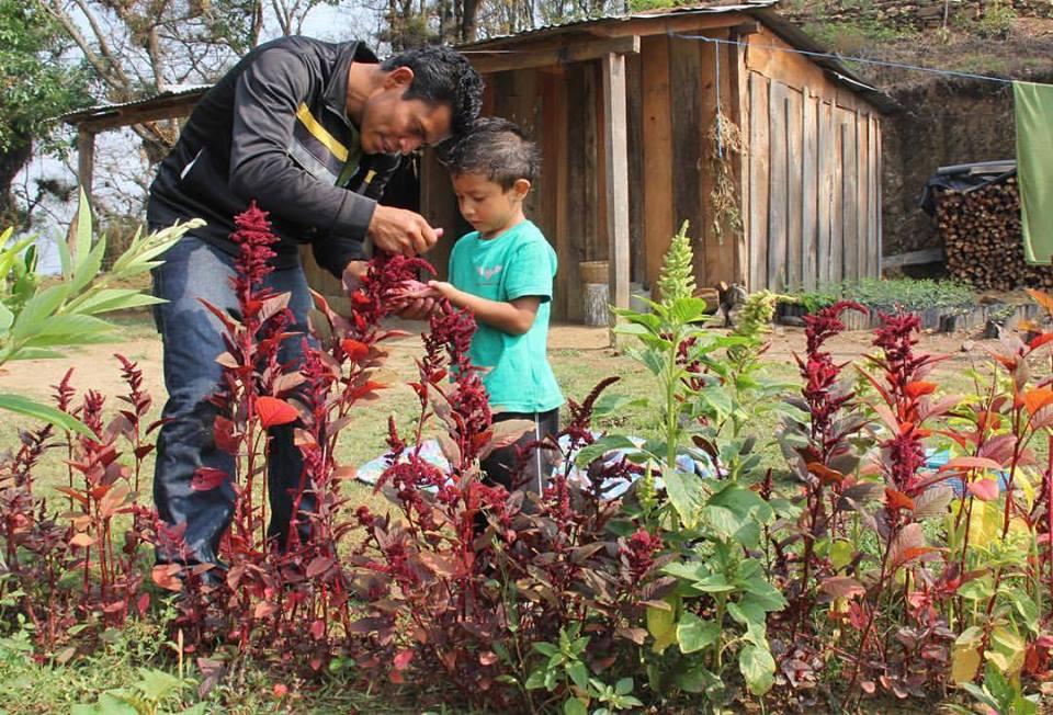 Amaranth Sowing with Qachuu Aloom