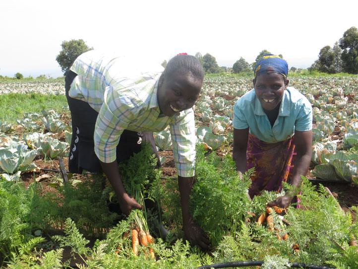 Farmers-harvesting