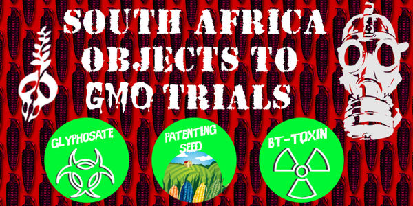 South Africa object to GMO field trials