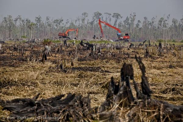 Excavators continue building a peatland drainage canal on the border between remaining rainforest and the charred stumps from fires on recently cleared peatland in the PT Rokan Adiraya Plantation palm oil plantation near Sontang village in Rokan Hulu, Riau, Sumatra.