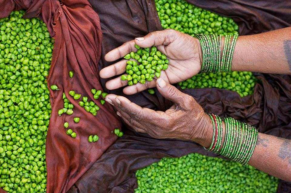 International Year of Pulses Celebration