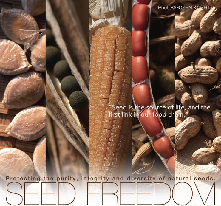 Seed_Freedom