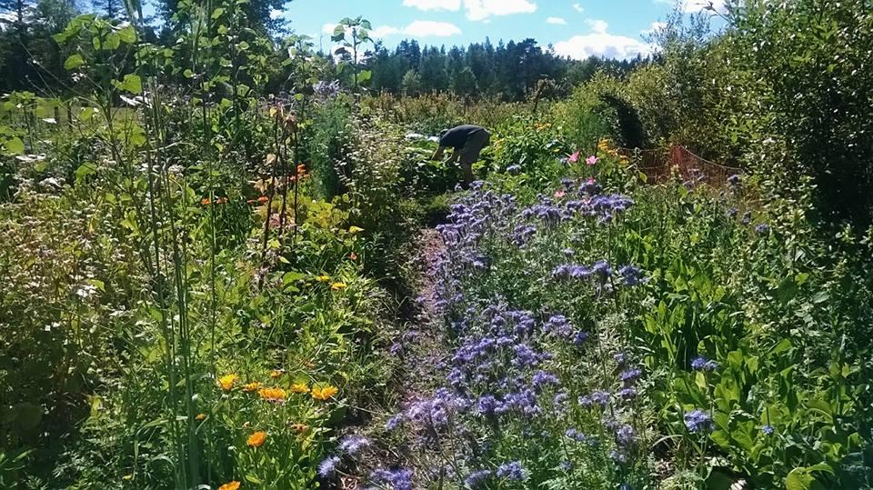 No-till gardening free workshop