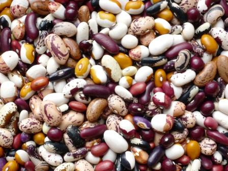 Die Mischung macht's – Mischkultur und Fruchtfolge im Gemüsegarten