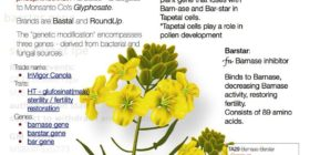 GMO Mustard – Bayer Patents, Pental Fraud