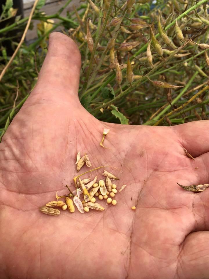 3rd Annual LIRSC Seed Swap