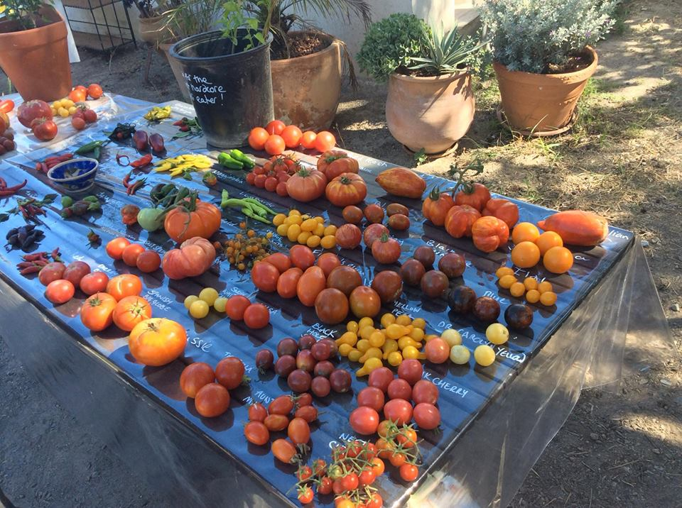 SEEeD Heritage vegetable day and seed swap