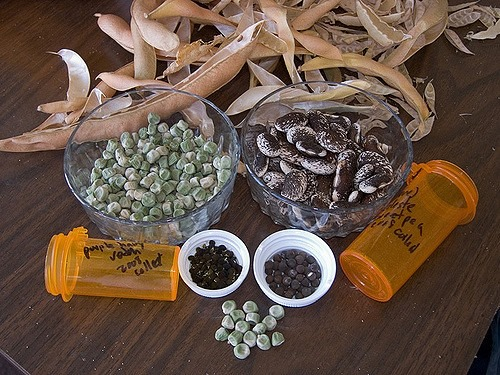 Seed Saving and September Library Hours