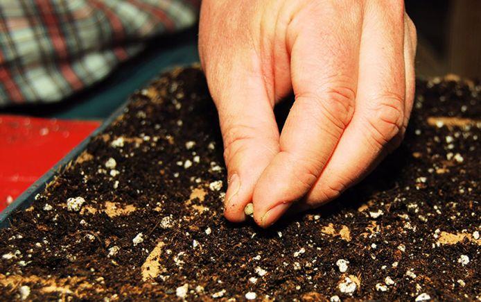 farmers-seeds-plant