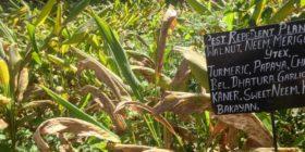 Celebrating Biodiversity at Navdanya Farm